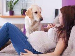 怀孕后这5种家务活打死也不能做